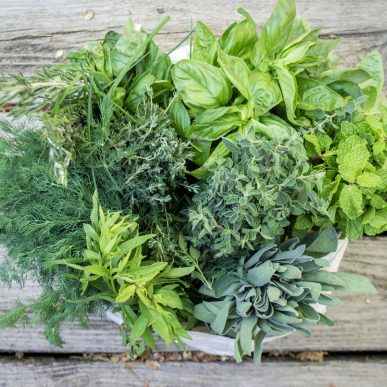 Nature's 5 Most Powerful Medicinal Plants